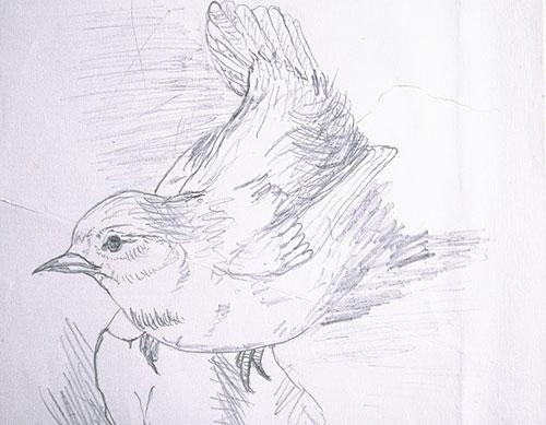 Wren-sketch.1886