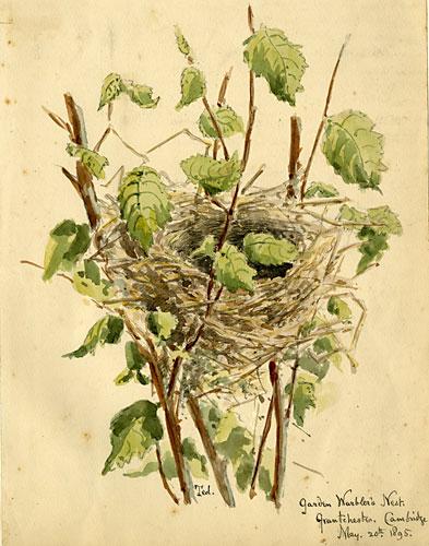 garden-warblers-nest 1895